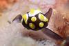 160409_Slug7
