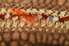 160401_Shrimp