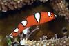 160402_Fish