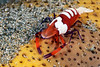 160403_Shrimp3a