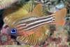 160406_Fish3