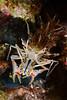 160404_Shrimp