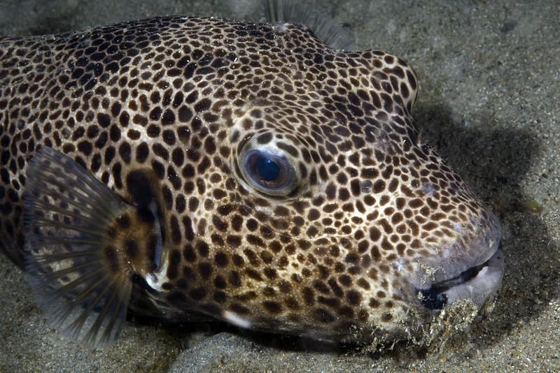 160402_Fish3