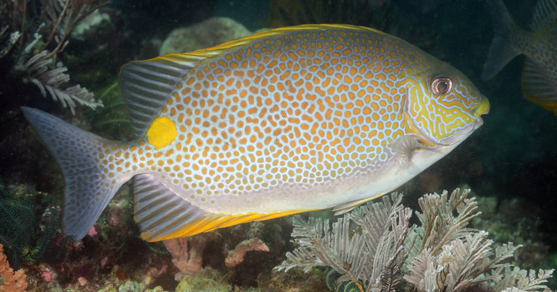 160404_Fish