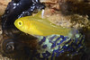 160408_Fish