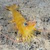 160402_Shrimp5d