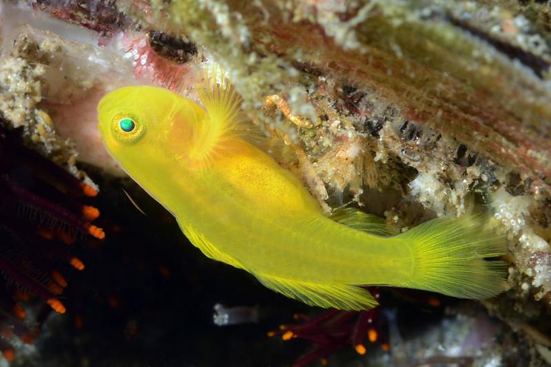 160330_Fish3d