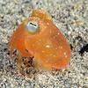 160402_Squid