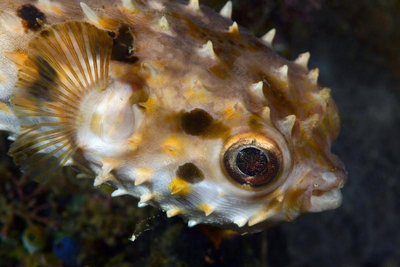 Fish<br /> Anilao, Philippines.
