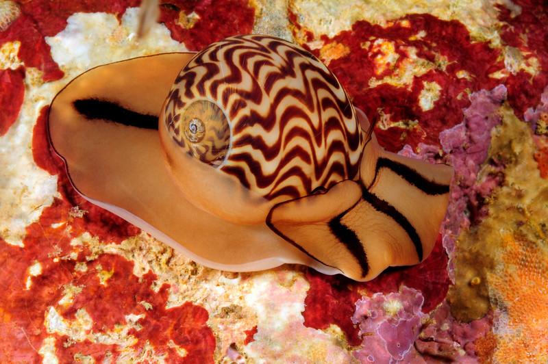 Snail_110407