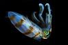 Squid_2011b
