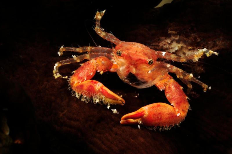 Crab_110405b