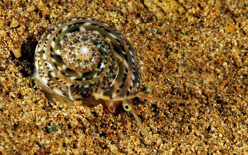 Snail_110407q