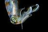 Squid_2011a