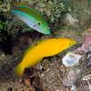 Fish_110415c