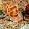 Snail_110407b