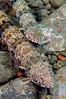 Lizardfish_110415