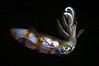 Squid_110403
