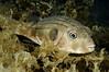 Fish_2011c