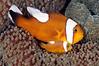Fish_110415f