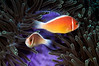 Fish_110414b