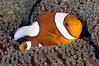 Fish_110415d