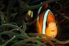 Nemo_110411