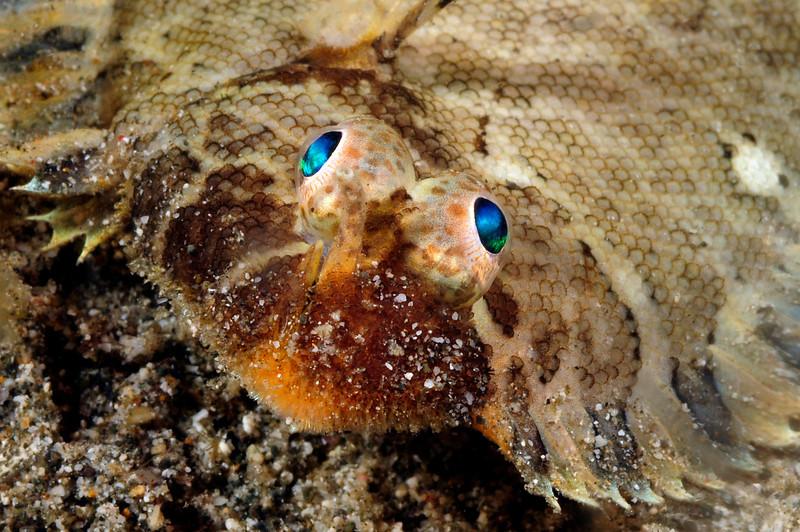 Fish_2011e