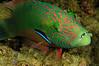 Fish2_110405
