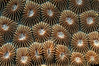 Coral3_110406b