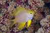 Fish_110412d