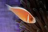 Fish_110414a