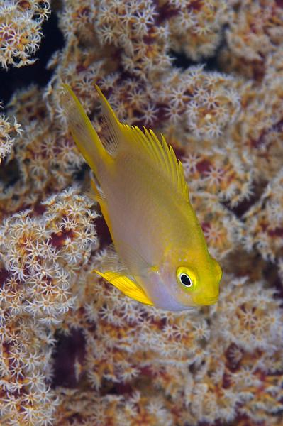 Fish_110412c