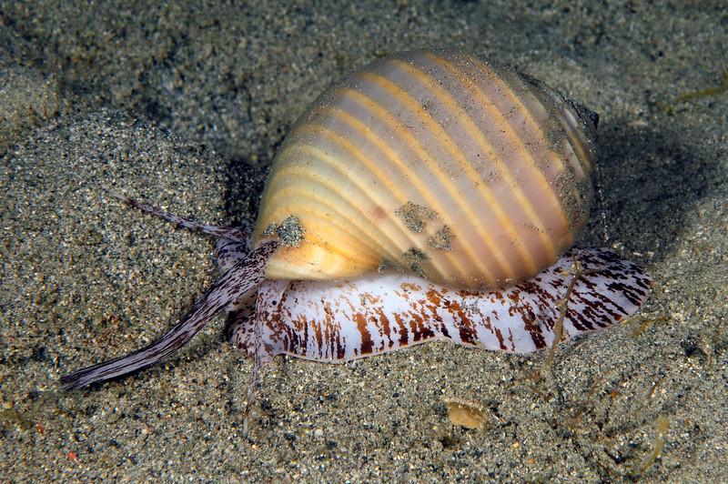Snail_110415k