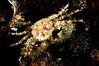 Crab_110411