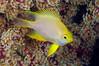 Fish_110412e