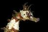 Seahorse-100406