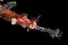 Pipefish_1004082