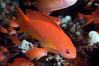 Fish_100403x