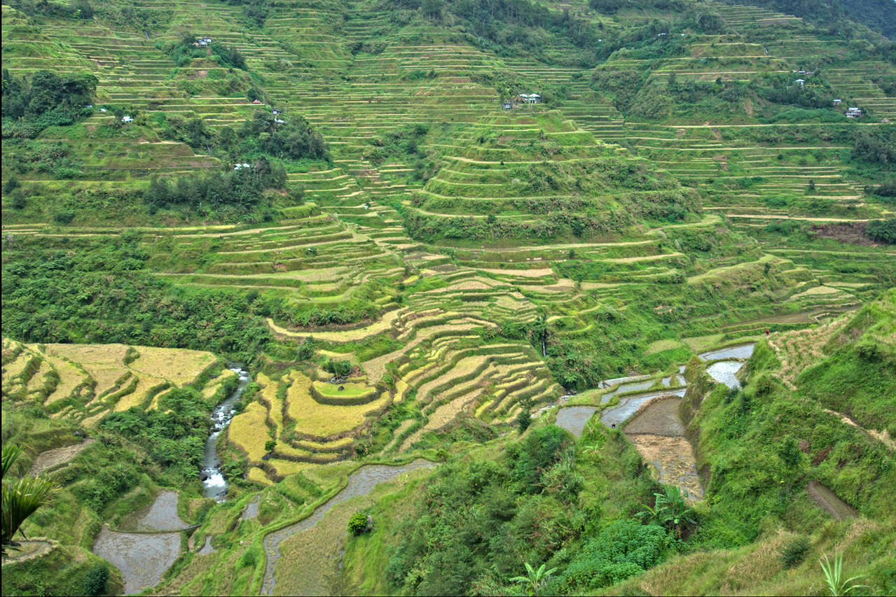 Closer shot of the fields at the Banaue Rice Terraces - Philippines