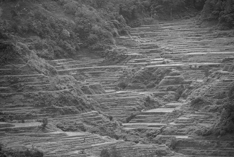Black and white shot of the Banaue Rice Terraces, Philippines