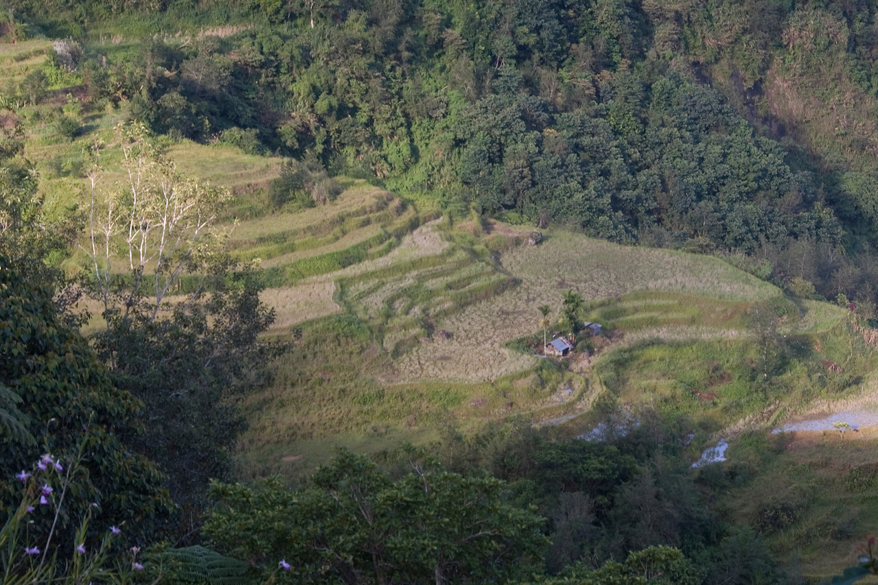 View of the rice terraces from the Banaue Hotel - Banaue, Philippines