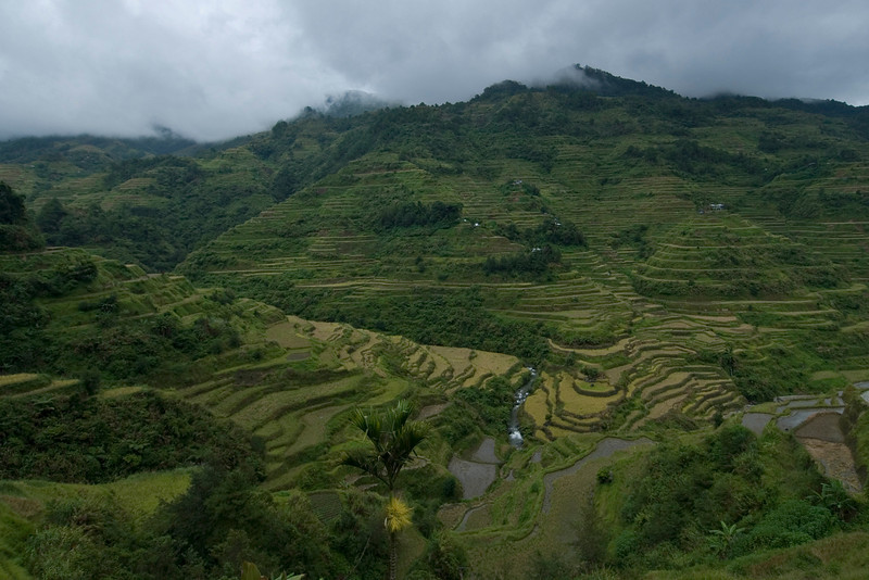 Wide view of the rice fields at the Banaue Rice Terraces - Philippines