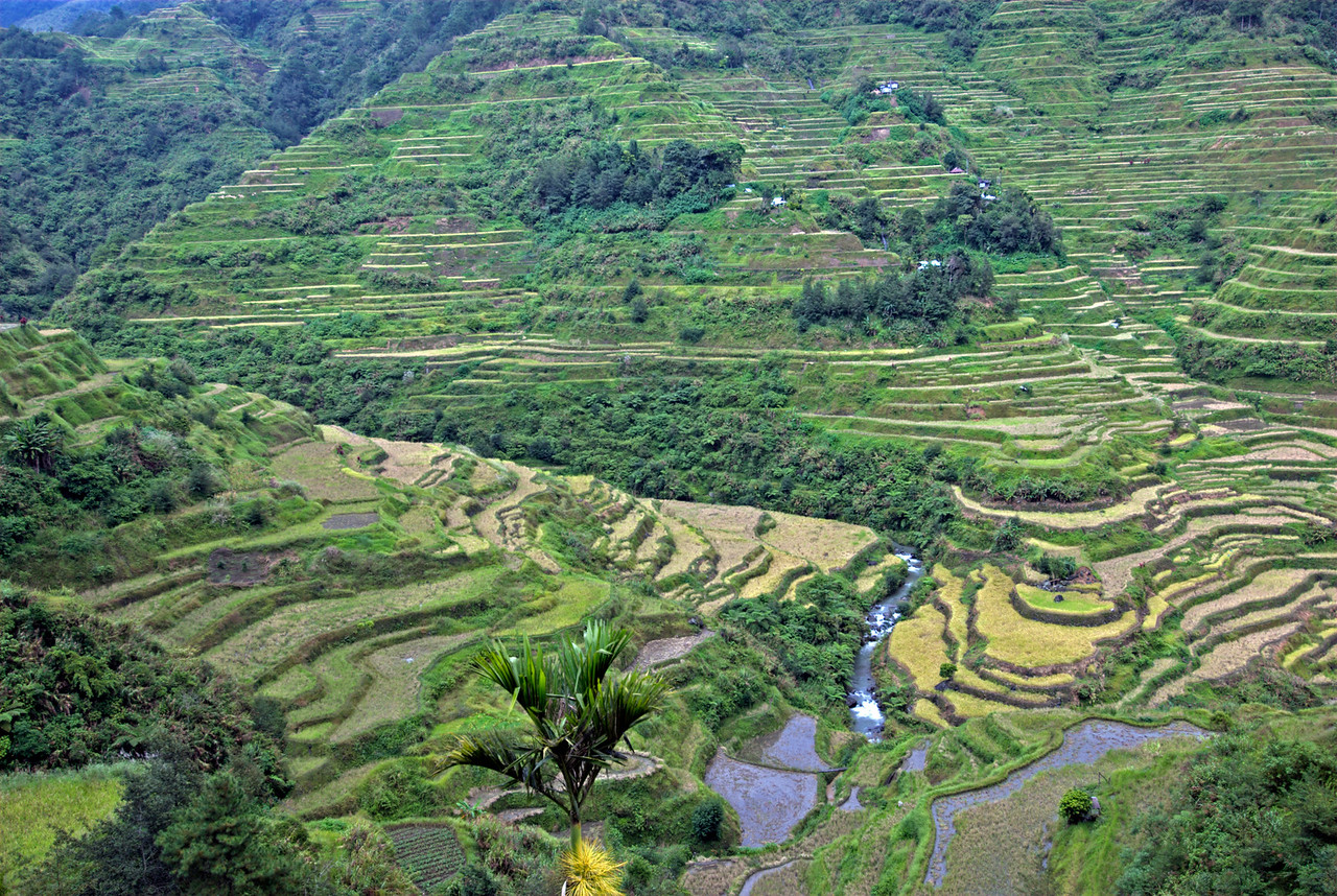Enhanced photo of the elaborate hand-made rice fields at Banaue Rice Terraces