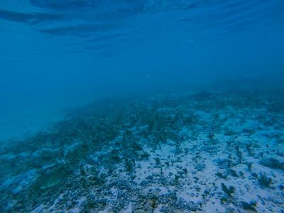 Dive in El Nido Series 1 Photograph 5
