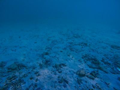 Dive in El Nido Series 1 Photograph 12