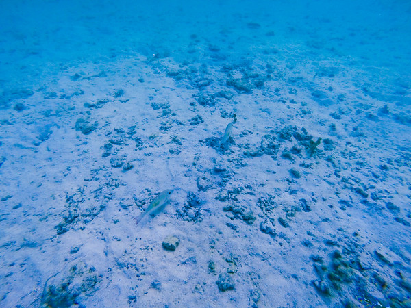 Dive in El Nido Series 1 Photograph 13
