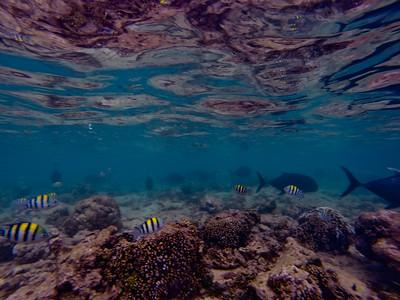 Dive in El Nido Series 2 Photograph 7