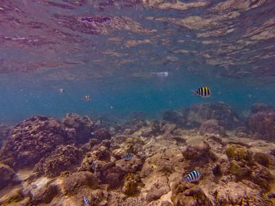 Dive in El Nido Series 2 Photograph 23