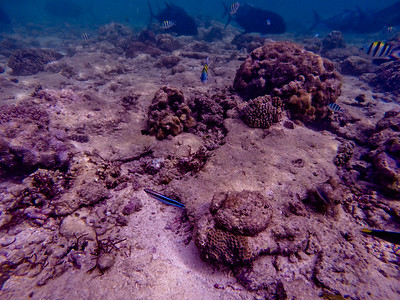 Dive in El Nido Series 2 Photograph 9